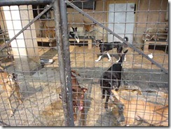 Animal Welfare & Protection Assoc - Colombo (10)