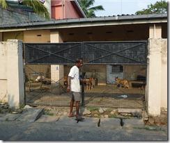 Animal Welfare & Protection Assoc - Colombo (16)
