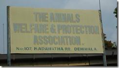 Animal Welfare & Protection Assoc - Colombo (3)