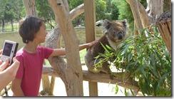 Boomerang Kangaroos Koalas 167