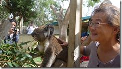 Boomerang Kangaroos Koalas 188