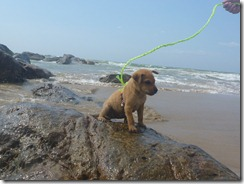 Colombo Beach - w Puppy (78)