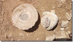 Luxor Adam's Farm Shells and Rocks (40)