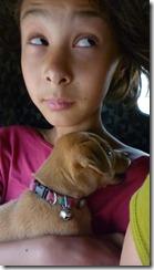 Puppy vet visit enroute