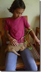 Puppy vet visit post-shot