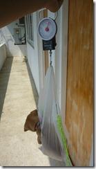 Puppy weight - 1.75 kg (2)