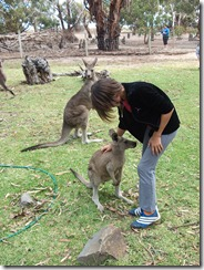 Victor Harbor Urimburrim Wildlife Park (15)