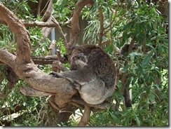Victor Harbor Urimburrim Wildlife Park (43)