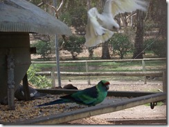 Victor Harbor Urimburrim Wildlife Park (55)