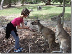 Victor Harbor UrimVictor Harbor Urimburrim Wildlife Park Souble Joey'd momsburrim Wildlife Park (69)