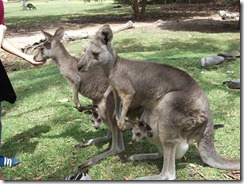 Victor Harbor Urimburrim Wildlife Park Souble Joey'd moms
