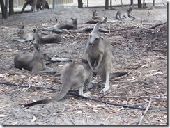 Victor Harbor Urimburrim Wildlife Park (9)