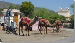 Jaipur streets (17)