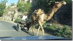 Jaipur streets (24)