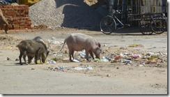 Jaipur streets (8)