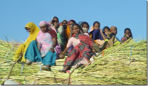 To Jaipur Women on Straw Tractor (3)