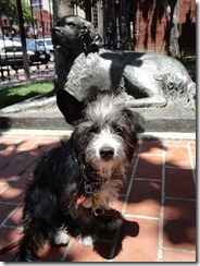 Gaslamp Museum park - Pepper posing by a bronze statue of Bum, the SD adopted dog in the 1800s.  Pepper thought it was real, and barked at it before settling down.
